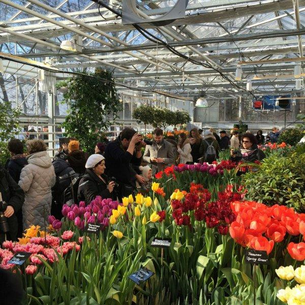 """За первые 2 дня работы выставку """"Репетиция весны"""" в """"Аптекарском огороде"""" посетили более 8400 человек"""