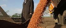 Упали цены на экспорт пшеницы