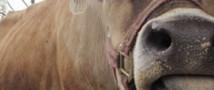 Животные из 30-километровой зоны вокруг ЧАЭС избежали мутации