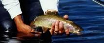 Закон о рыбалке обсудит общественность