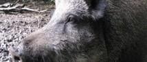Животных будут лечить и откроют приют
