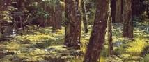 Сиверский лес может исчезнуть по вине строителей