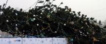 ЧП в Костроме: на женщину и ребёнка упала новогодняя ёлка.