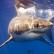 В Австралии акулы снова нападают на людей.