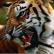 В зоопарке амурской области тигр напал на ребенка.