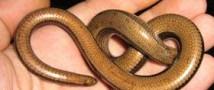 Израильский младенец откусил голову змее