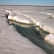 В Финском заливе найдена вмерзшая лыжница