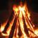 В парке Санкт-Петербурга человек был сожжен на костре