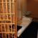 Из психиатрической лечебницы в Ленинградской области сбежали рецидивисты