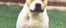 В Москве собака, гуляющая без намордника, покусала ребенка
