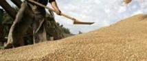 Минфин не намерен финансировать сельское хозяйство России