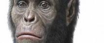 Ученые определили рацион ранних предков человека