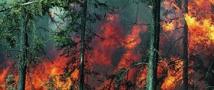 На Ямале горит лес рядом с нефтегазовым месторождением