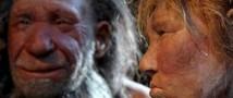 Неандертальцам было известно о целебных свойствах тысячелистника и ромашки