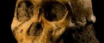 В лабораторном камне обнаружены останки австралопитека