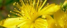 Омские агрохимики создадут идеальное удобрение для лекарственных трав