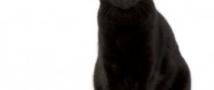 В ростовской колонии черная кошка проносила героин заключенным