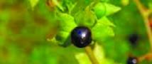 Под Саратовом ядовитой травой отравились одиннадцать детей