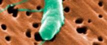 У бактерий обнаружили социальные роли