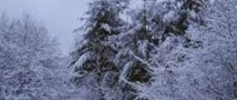Холодную зиму и раннюю весну прогнозируют синоптики
