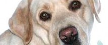 Московскими властями были осуждены люди, которые отравляют собак