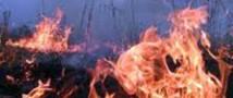 Все лесные пожары были потушены на Камчатке