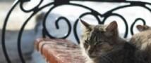 Государственная дума планирует ужесточить правила содержания домашних животных