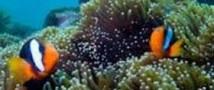 Самый крупный в мире океанариум откроется в Сингапуре
