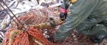 ФВС хочет выгнать китайских рыбаков с российского Дальнего Востока
