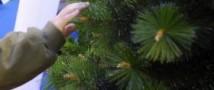 В Екатеринбурге инкассаторы, угрожая оружием, похитили елку