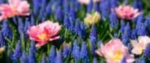 Цветы способны спасти мозг человека