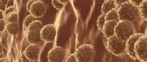 В Воронежской области СКР начала проверку по факту массового заболевания гепатитом