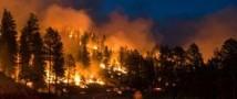 Защитница природы, живущая на эвкалиптовом дереве, была вынуждена спуститься из-за пожара