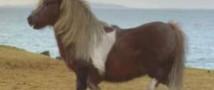 Пользователи интернета пришли в восторг от рекламы с танцующим пони