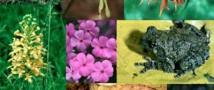 III Всероссийская конференция молодых ученых «Биоразнообразие: глобальные и региональные процессы»