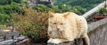 Кошки спасли вымирающий город