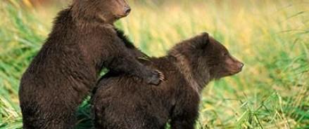 В Украине найдена медвежья тюрьма
