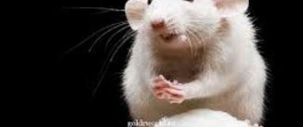 Мыши будут с ложной памятью