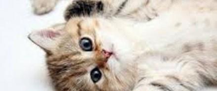Омского студента будут судить за ролик об убийстве котят