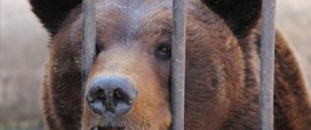 Медведь загрыз 41-летнего мужчину