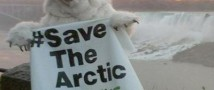 Правоохранительные органы задержали белого медведя
