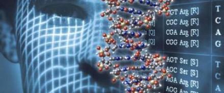 Учеными было установлено какие гены отвечают за черты лица