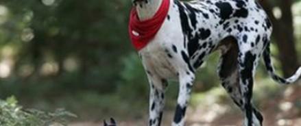 Умерла самая большая собака в мире
