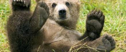 Йети – древний полярный медведь