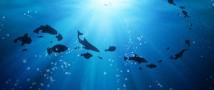 Максимальный уровень воды в Мировом океане был достигнут в марте 2013 года