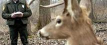 Роботизированные олени помогут правоохранителям ловить браконьеров