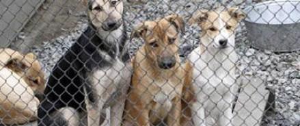 В приюте для животных, расположенном в пригороде Читы, найдено 20 трупов собак