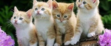 Современные технологии для котов