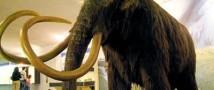 Датский ученый узнал причину гибели мамонтов