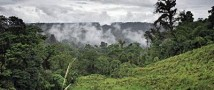Маленькая девочка обнаружена в глухих джунглях Амазонской низменности